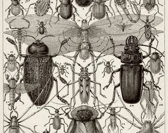 Wondrousstrange Design COTTON FABRIC Entomology Insects Bee Beetle 8.5 x 11 fabric sheet Quilting Sewing