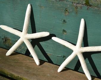 "White Finger Starfish ( 4-5"") | 1 Piece"