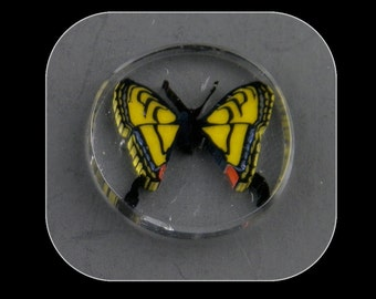 Swallowtail by Greg Chase Murrine Boro Cobachon - 127 B