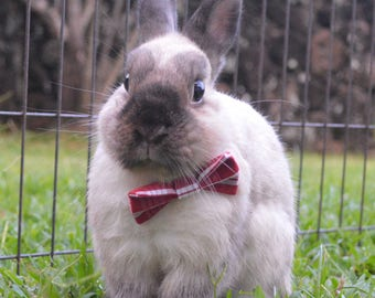 Palaka plaid bow for small animals, plaid bow tie, bunny bow tie, rabbit bow, guinea pig bow