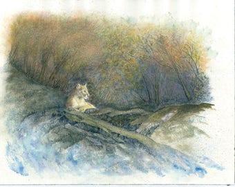 Cougar Resting 18x24 watercolor & Gouache #3a
