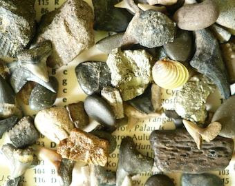 RIVER TREASURES from Peace River in Florida, fossil finds, shark teeth, stone crystals