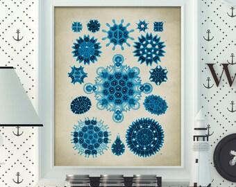 Blue Marine microorganisms print, seal life print, ocean wall decor, marine biology study, antique sea creatures, beach home decor