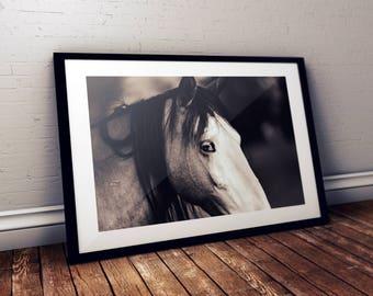 Horse Print, Horse Art, HorsePhoto, Animal Wall Hanging by The Urban Buffalo