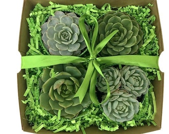 Green Gift Succulent Gift Box-Garden in a Box-Thank You Gift-Boxed Succulents-Housewarming Gift-Plant Gift Box-Birthday Gift-Teacher Gift