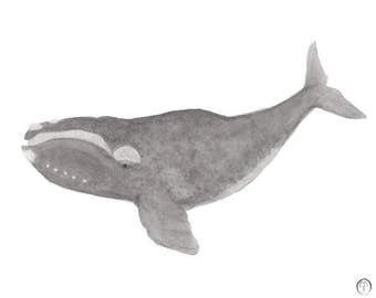 Right Whale, watercolor painting, art print, nautical print, beach decor, wall art