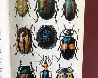 Vintage Peterson Field Guide to the Insects of America North of Mexico Borror White, 1970s paperback reference