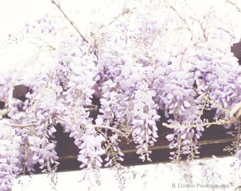Flower Photography - Wisteria Photograph - Flowers - Wisteria - Cottage Decor - Fine Art Photography Print - Purple White Home Decor