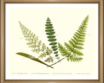 "Fern Print No.28. Botanical Print. Fern Print. Fern Illustration. 5x7"", 8x10"", 11x14"""