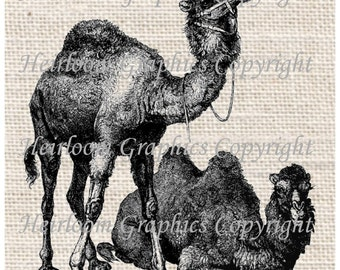 Camel Iron On Digital Transfer - Vintage Camels Digital Download For Totes Tees Pillows Burlap Transfers Towels