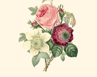 Vintage Blumen Blumenstrauß aus Rosen, Anemonen und Daria Drucken 8 x 10 P204