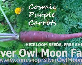 Cosmic Purple Carrot seeds, OP/Heirloom Gourmet Carrots