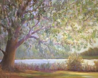 Tallahassee Live Oak