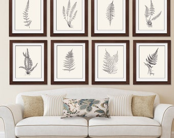 Ferns Garden Botanical Prints (Series F) Set of 8 - Art Prints (Featured in Black on Soft Cream) Botanical Art Prints / Posters