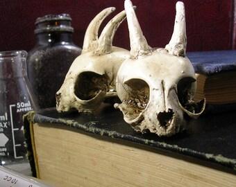 Cast resin Imp skull by Catalyst Studios
