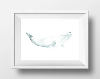 Beluga Watercolor Art Print, Original Watercolor Archival Print  | 8x10 8.5x11 11x14 | watercolor whale art | home decor | nursery art