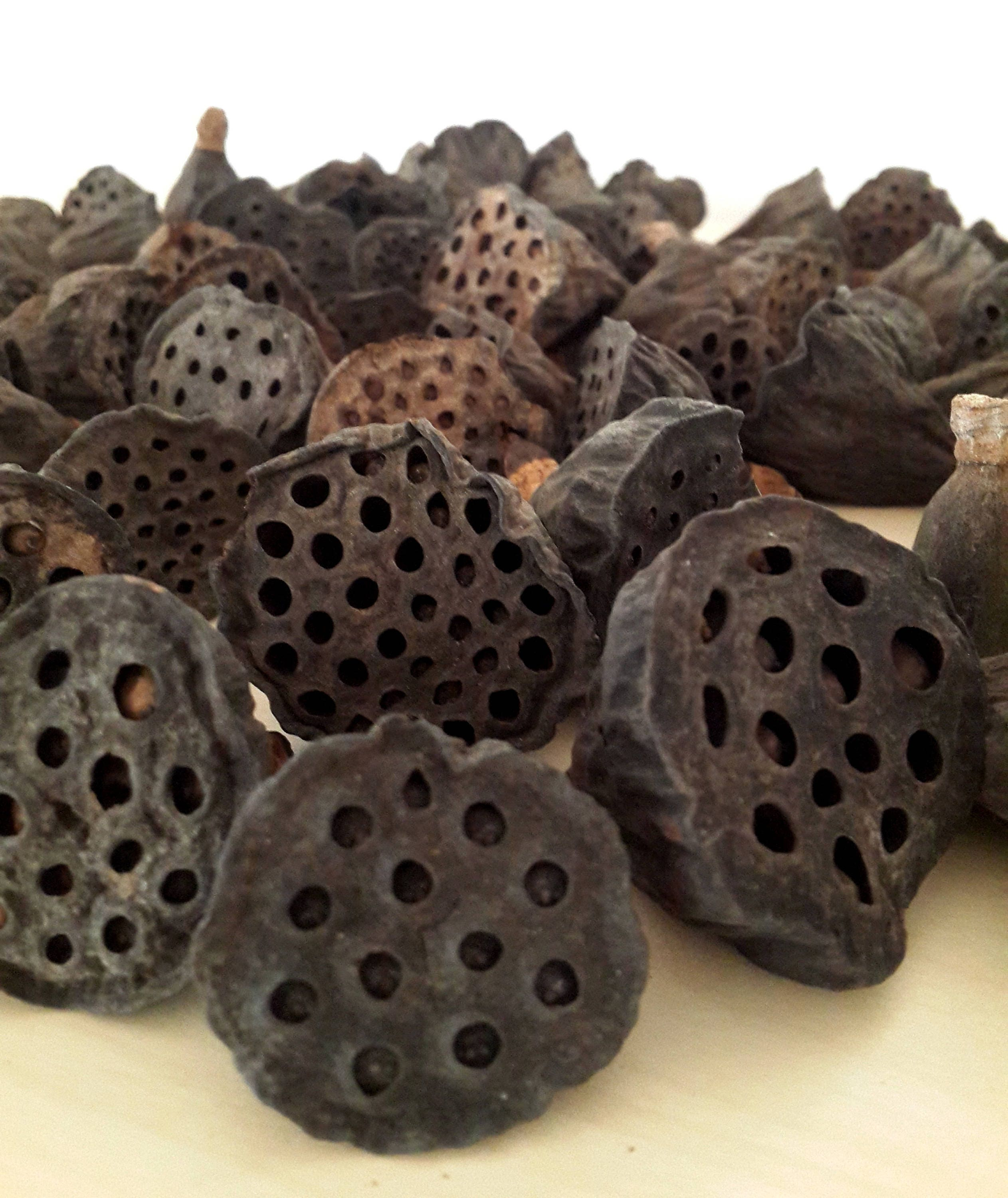 Lotus Flower Pods Lotus Dried Pods Lotus Seed Pods Dried