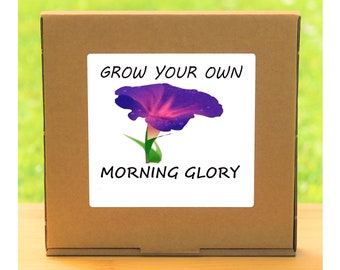 Unusual Windowsill Gardening Gift - Grow Your Own Morning Glory Plant Kit - Quirky gift for men or women