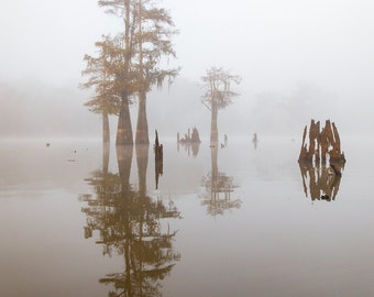 Louisiana Cypress Swamp on a Foggy Morning Two