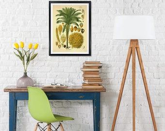 African Oil Palm Botanical Print, Elaeis guineensis, Palm print, medical botanicals, vintage flower print, kitchen botanical art