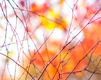 Abstract Photography, Fall Branches, Background Lighting, Orange Leaves, Fall, Nature, Art