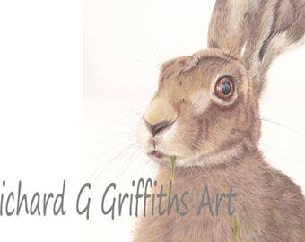 A4 Hare Print from Original Drawing Unmounted