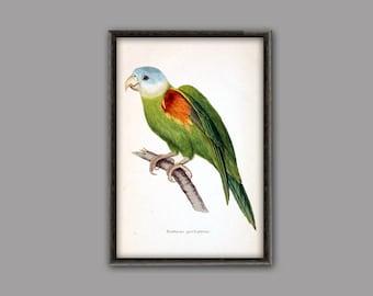 Parrot Print - Parrot Wall Art - Parrot Decor - Bird Wall Art - Tropical Bird Poster - Bird Art - Ornithologist Gift Idea - Rainbow