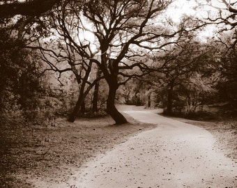 Minimalist Black and White Sepia Nature Winding Road through Trees - Fine Art Photograph Print Picture