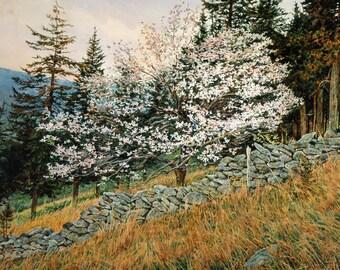 Kimadee Hill by David Armstrong