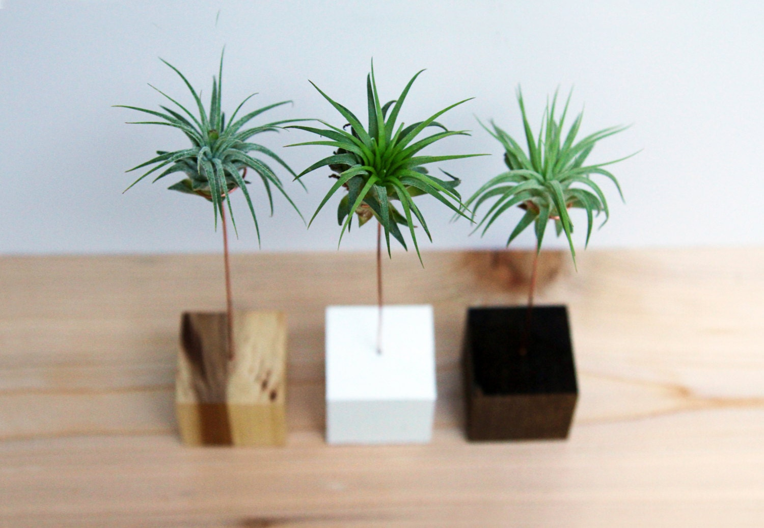 Palm tree wood block air plant stand wood and copper zoom aloadofball Images