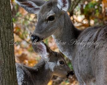 Deer,Fawn,Ashland,Oregon,Lithia Park,Travelers,Photo,Fall colors,Wildlife Photography,Nature Photography,Wall Decor, Print,Canvas, Metal Art