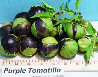 Purple Tomatillo Heirloom Seeds Non-GMO Naturally Grown Open Pollinated Gardening