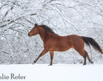 Horse Photography Horse Art Horse in the Snow