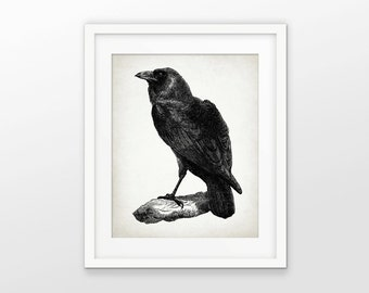 Raven Art Print - Raven Poster - Raven Illustration - Raven Bird - Bird Art - Black Raven Bird - Single Print #1553 - INSTANT DOWNLOAD