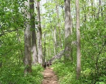 Forest Art Print, Nature Photography Landscape Woodland Summer Decor Spring Decor Hiking Green Wall Art Wall Decor