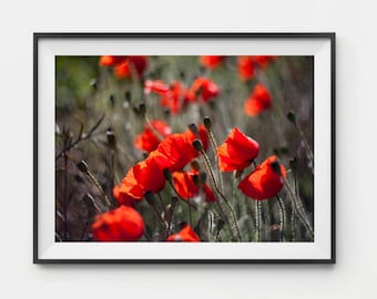Poppy print, Floral Gift for Mom, Mothers Day Gift, Spring Print, Red Poppies wall art, Poppies Art, Poppies Artwork, Poppy Art, Poppy decor