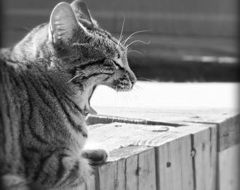 Black and White cat, yawning kitty, photographic art, print, 11x14