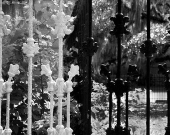 Black and White Photography, Savannah Art Photo, Secret Garden Gate, Southern Georgia Charm,  Gothic Decor Print