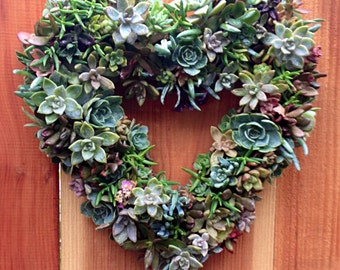 "DIY 13"" Heart Shaped Succulent Wreath Kit incl. cuttings, tool & pins"