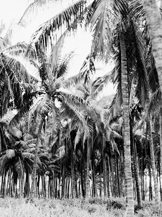 North Shore Coconut Grove