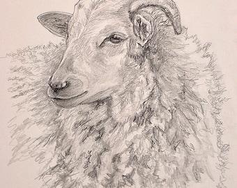 Sheep Drawing, Sheep Print, Sheep Art, Farm Animal Art, Farm Art Print, Farmyard Animal Print,  Den Art, Home Decor Wall Art by P. Tarlow