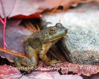 "Frog Amongst Autumn Leaves - Fine Art Photograph - 5 x 7"""