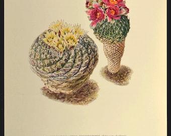 Nature Wall Decor Botanical Print Cactus Print Cacti Art
