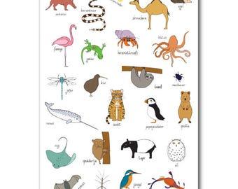 Peculiar animal alphabet   Poster   Dutch   Nursery   Illustration