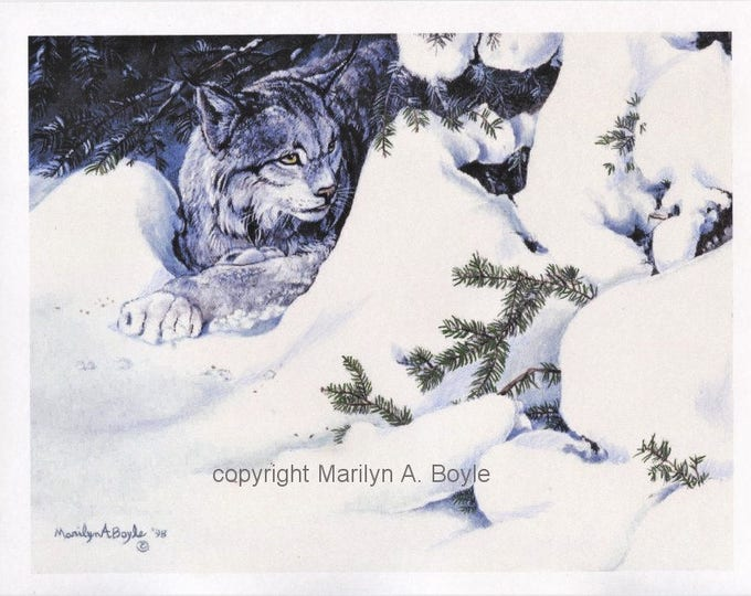 PRINT=CANADA LYNX; 8 X 10 Inch on card stock, hand enhanced, wall art, Canadian art, winter,