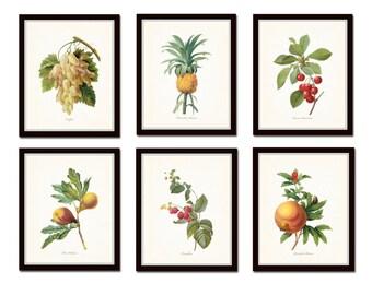 Antique Fruit Prints Set No. 2, Redoute, Fruit Prints, Gallery Wall Art, Giclee, Illustration, Print Sets, Botanical Prints,Kitchen Art
