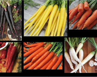 Carrot Seeds COMBO Black Nebula Atomic Red Cored Chantentay Lunar White Solar Yellow Scarlet Nantes Super RARE pack