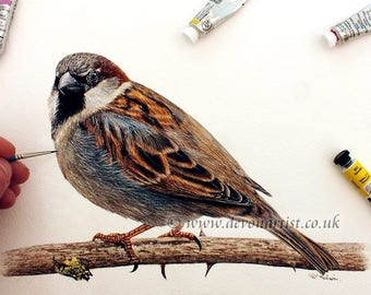 Watercolour Painting, House Sparrow, Original Painting, Illustration Art, Realistic Bird Artwork, Watercolor Birds, Wildlife Animals