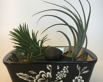 Air Plants in Loaf Dish