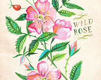 Wild Rose print | Katie Daisy Art | Watercolor Floral | Wall art | 8x10 | 11x14